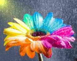 Гармония цвета в кадре