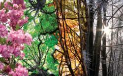 Натуральная красота: все о фотографии на природе